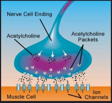 acetylcholine 999999999
